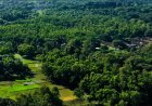 Aarey officially declared as forest, 712 acres of land handed over to SGNP
