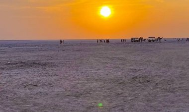 NTPC gets a green signal to build the single largest solar park in Rann of Kutch