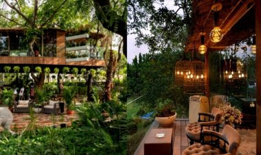 THIS glass treehouse in Delhi will remind you of a hill station